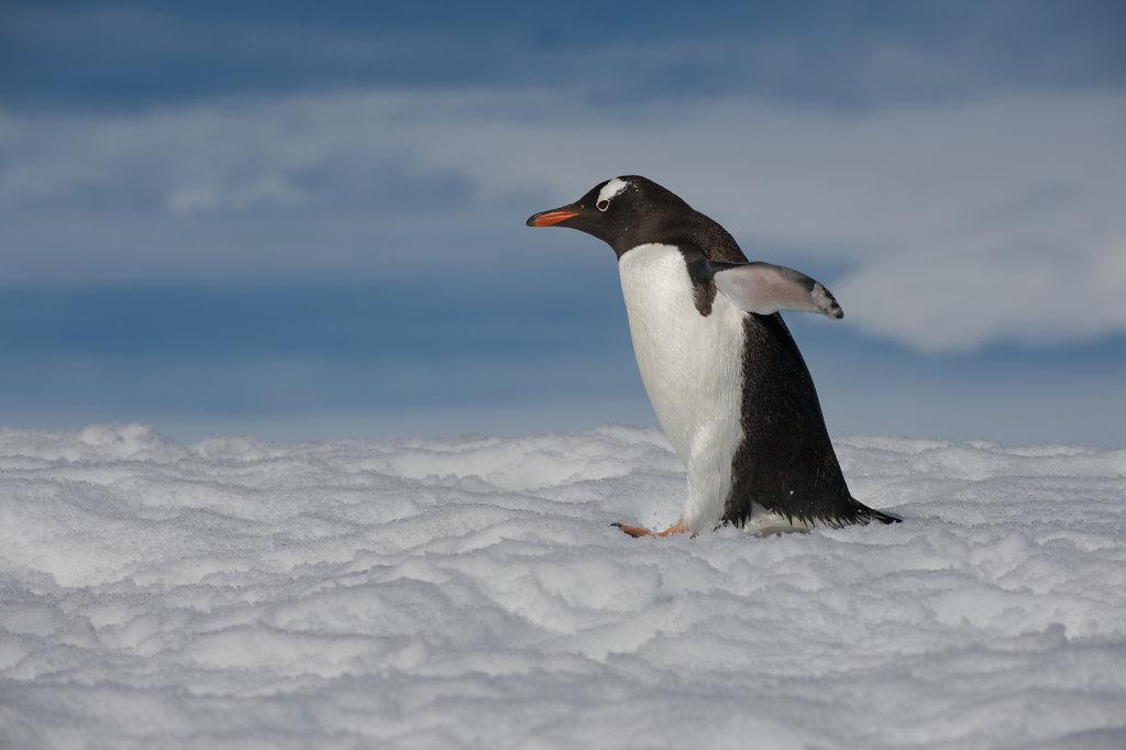 Antarctica10.jpg