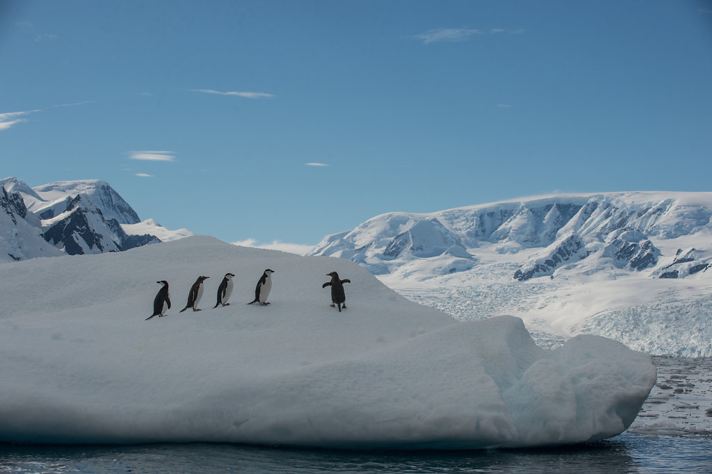 Antarctica53.jpg