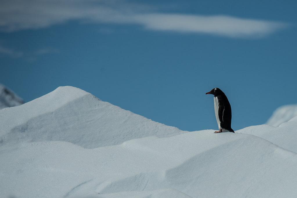 Antarctica56.jpg