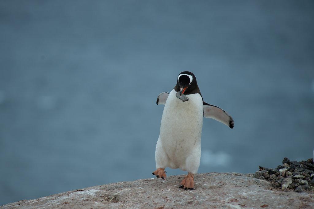 Antarctica59.jpg