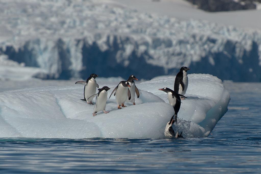 Antarctica61.jpg