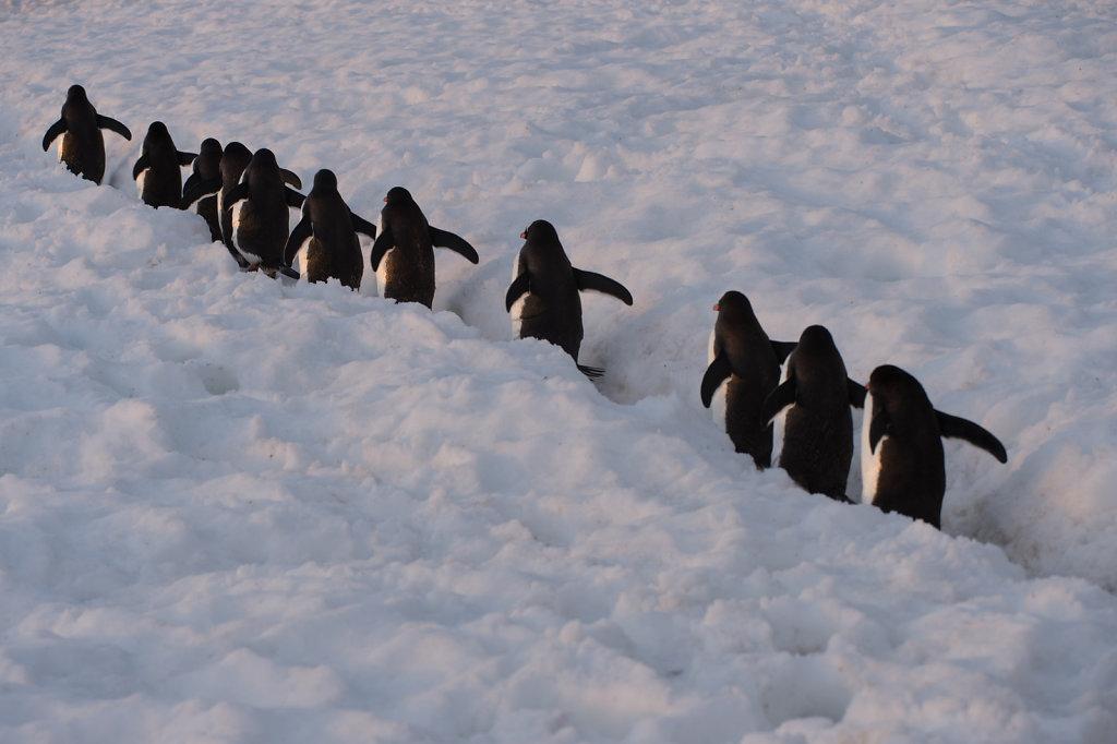 Antarctica62.jpg