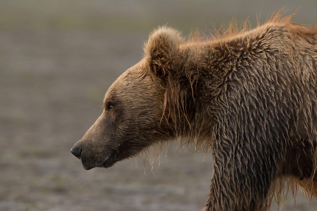 Alaska14-37.jpg