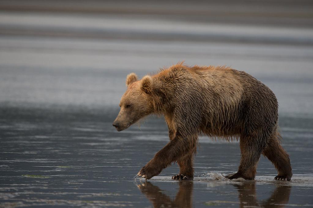 Alaska14-36.jpg