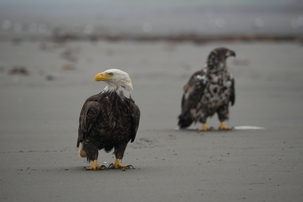 Alaska14-26.jpg