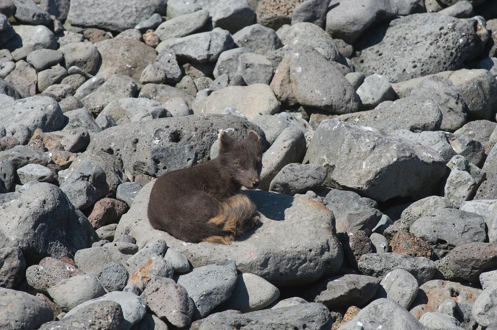 Alaska14-05.jpg