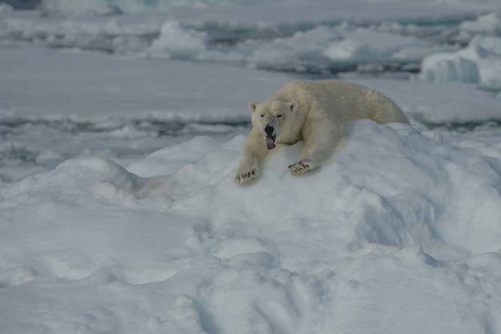 Spitsbergen14-07.jpg