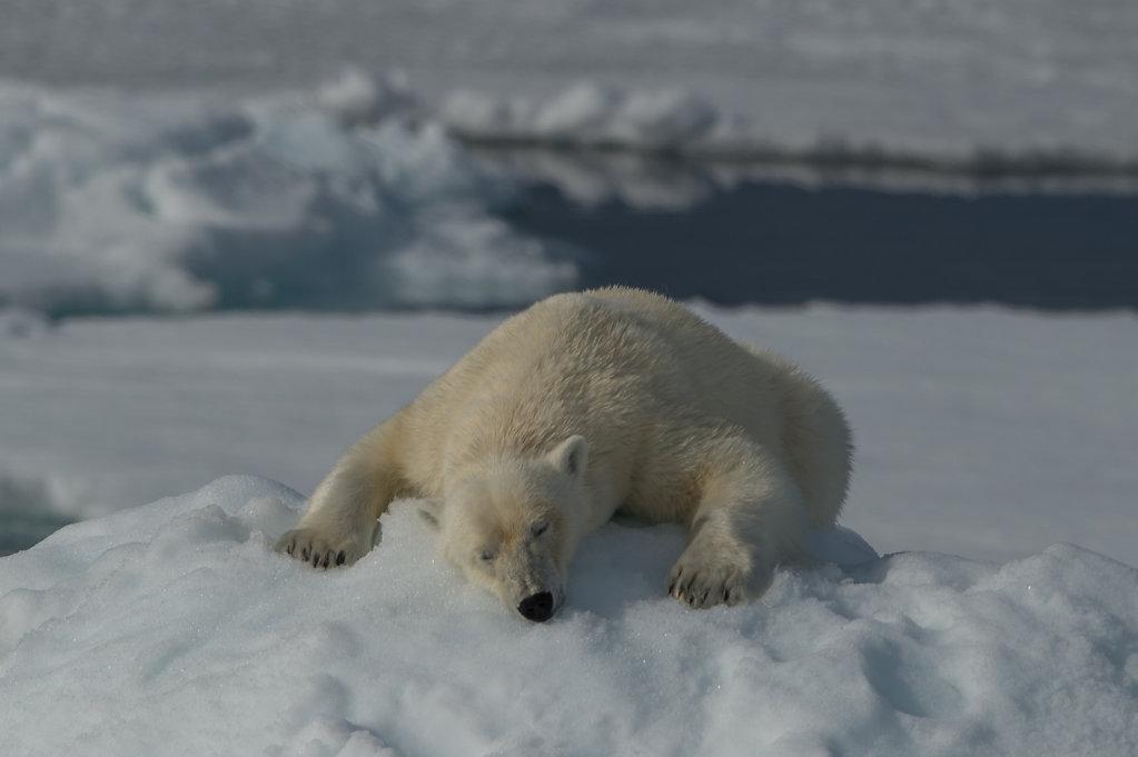 Spitsbergen14-10.jpg