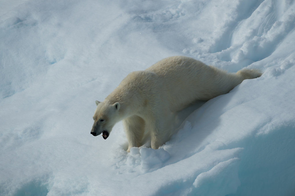 Spitsbergen14-13.jpg