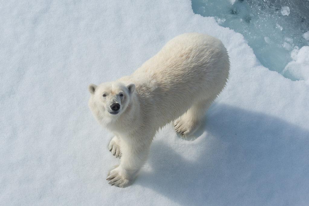 Spitsbergen14-26.jpg