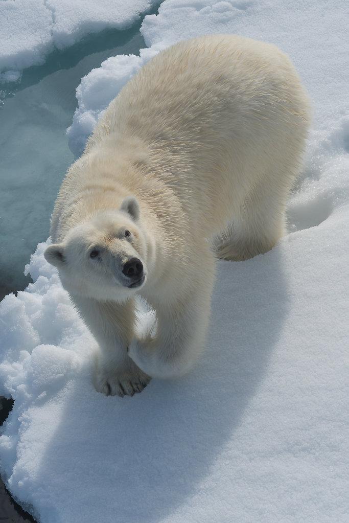 Spitsbergen14-30.jpg