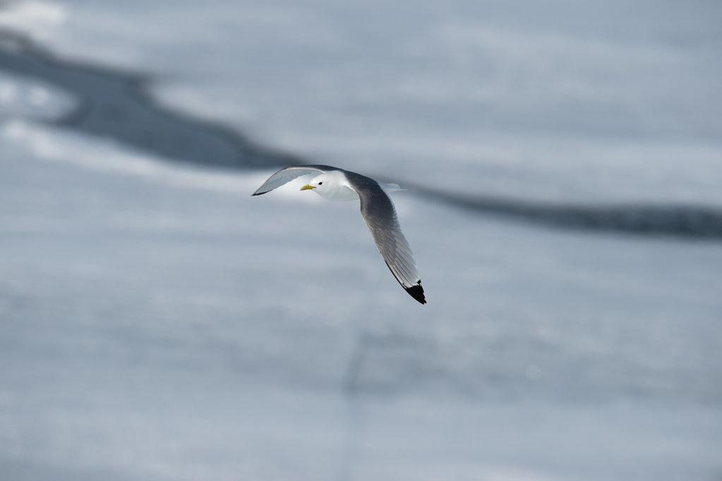 Spitsbergen14-36.jpg