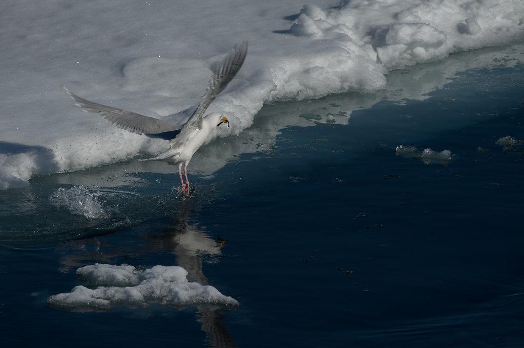 Spitsbergen14-40.jpg