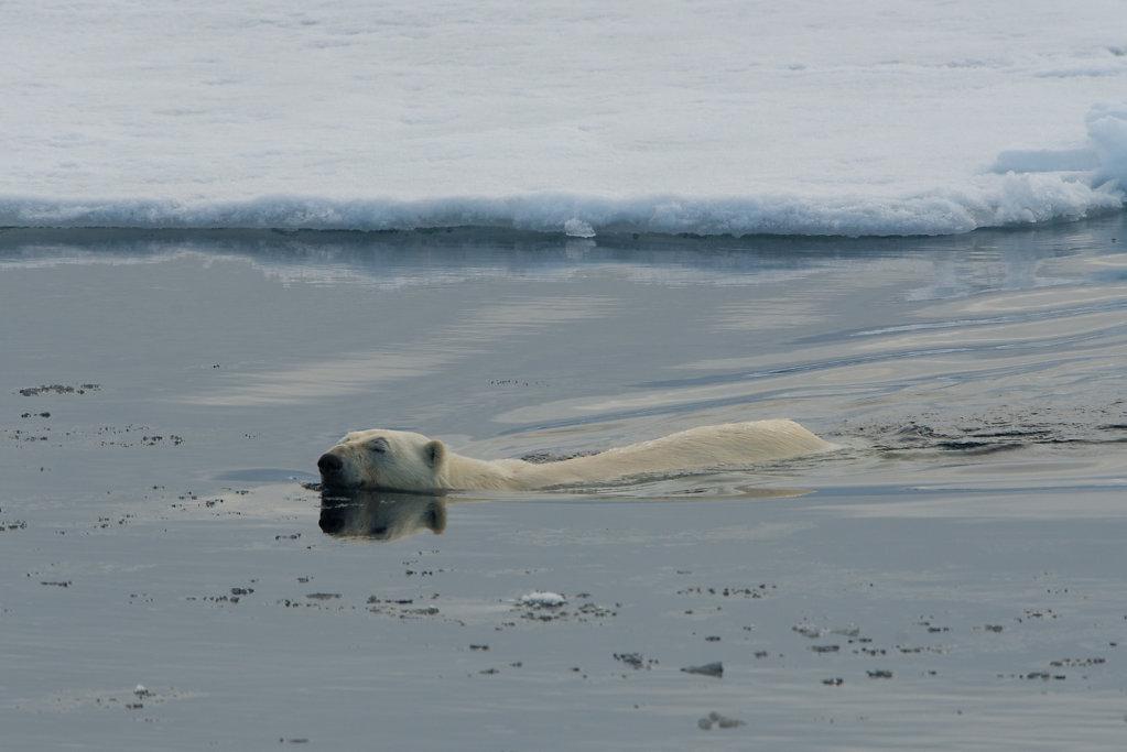 Spitsbergen14-49.jpg