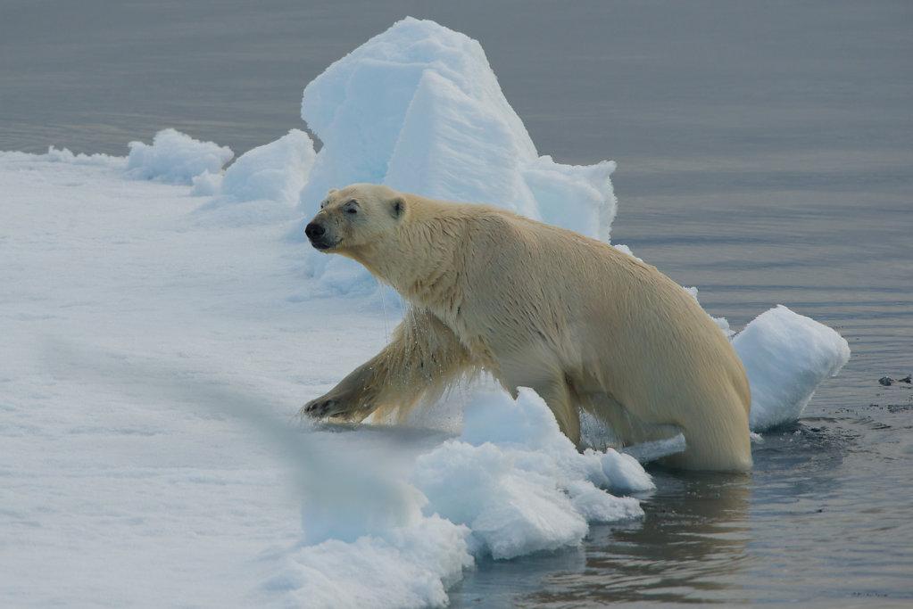 Spitsbergen14-50.jpg