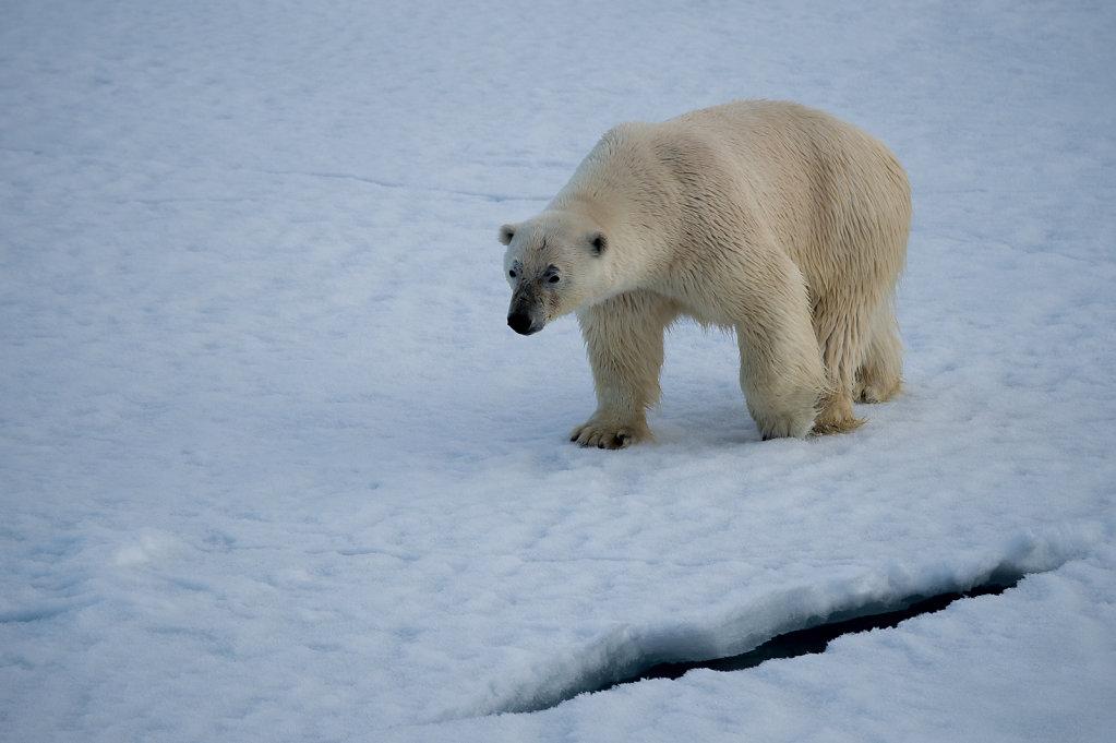 Spitsbergen14-51.jpg