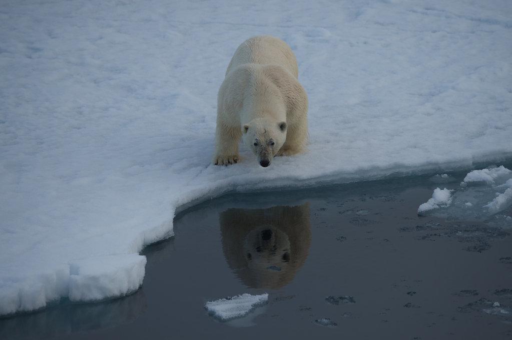 Spitsbergen14-52.jpg