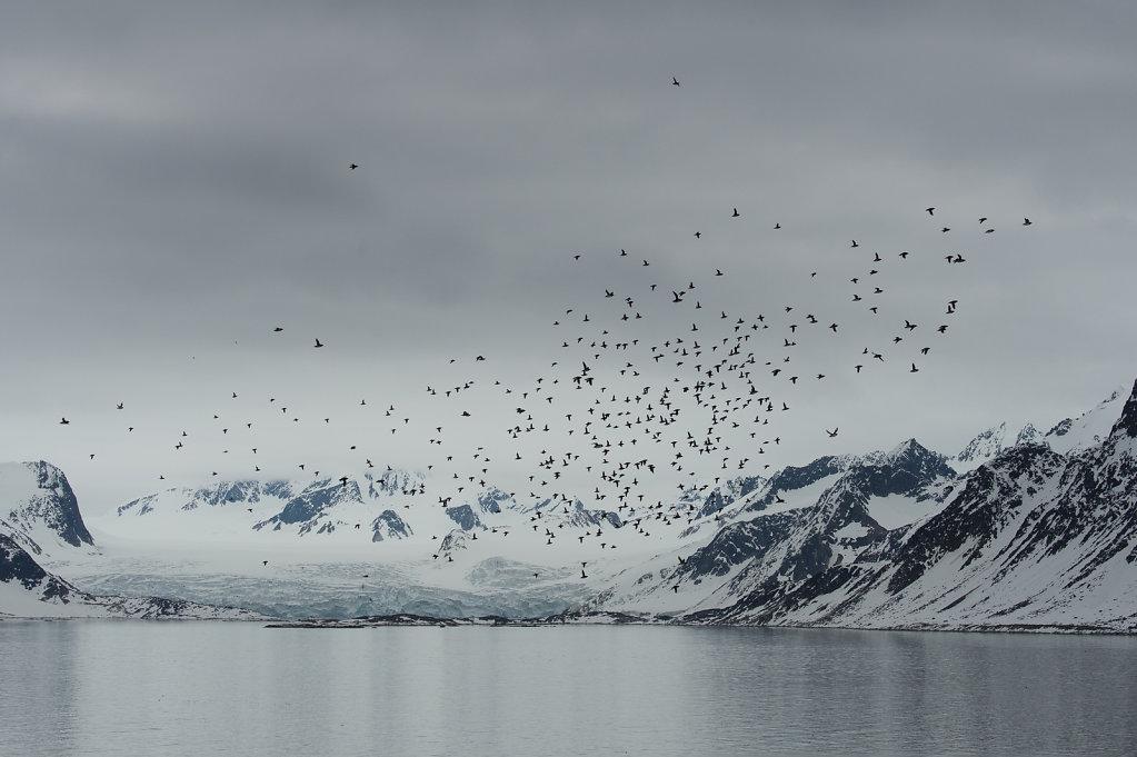 Spitsbergen14-57.jpg