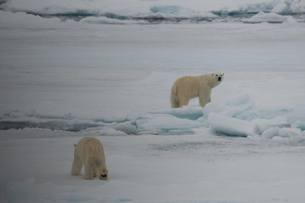 Spitsbergen14-68.jpg