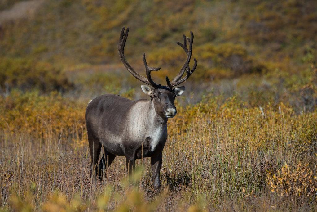 Alaska16-008.jpg