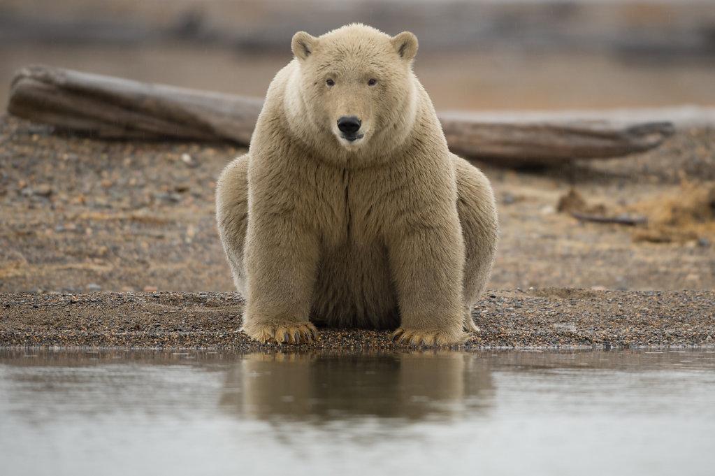Alaska North