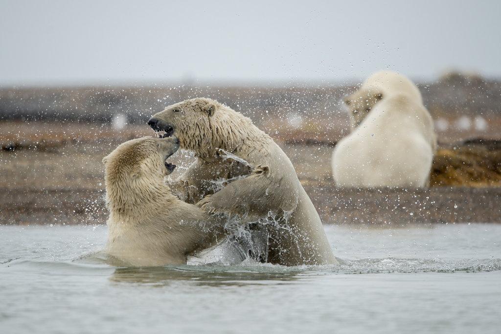 Alaska16-045.jpg