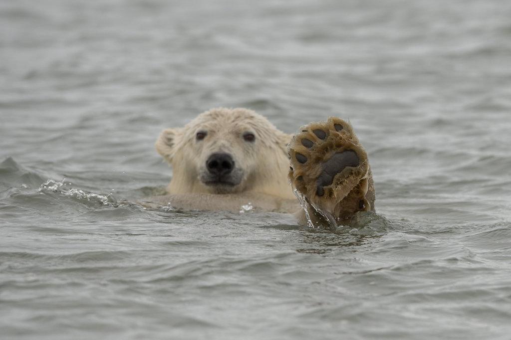 Alaska16-068.jpg