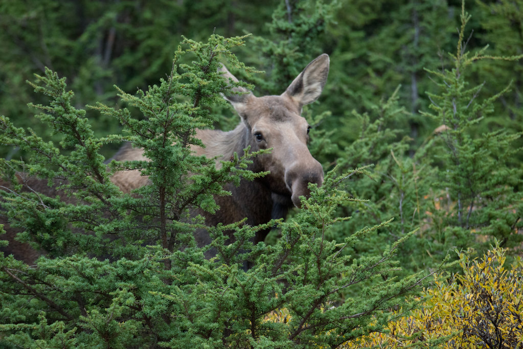 Alaska16-072.jpg