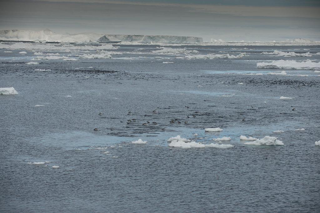 Antarctica16.jpg