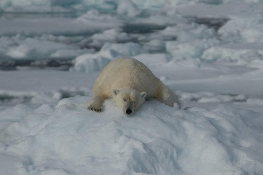 Spitsbergen14-08.jpg