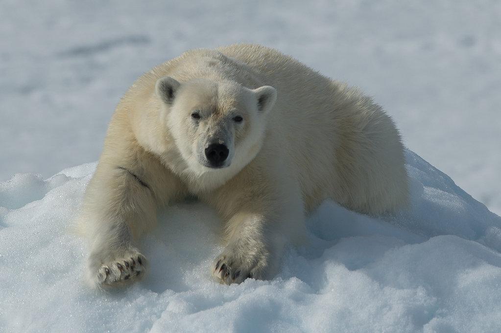 Spitsbergen14-11.jpg