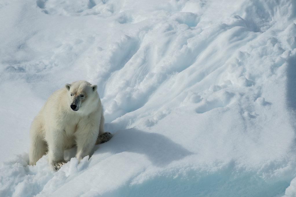 Spitsbergen14-14.jpg