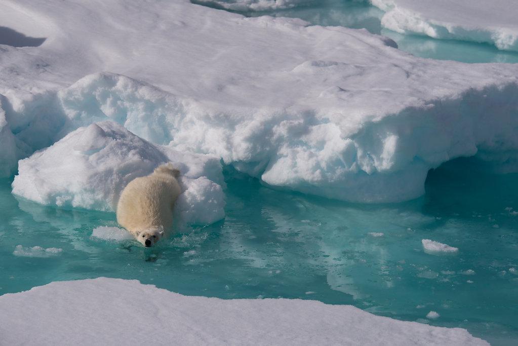 Spitsbergen14-16.jpg