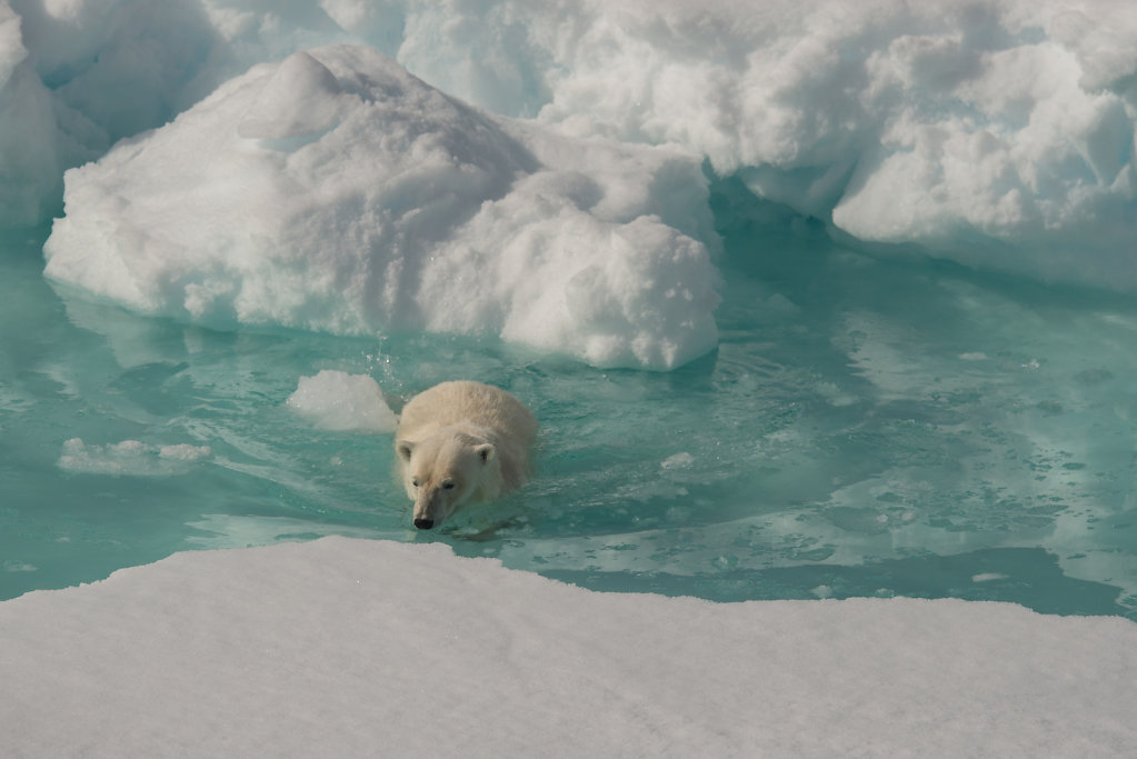 Spitsbergen14-17.jpg