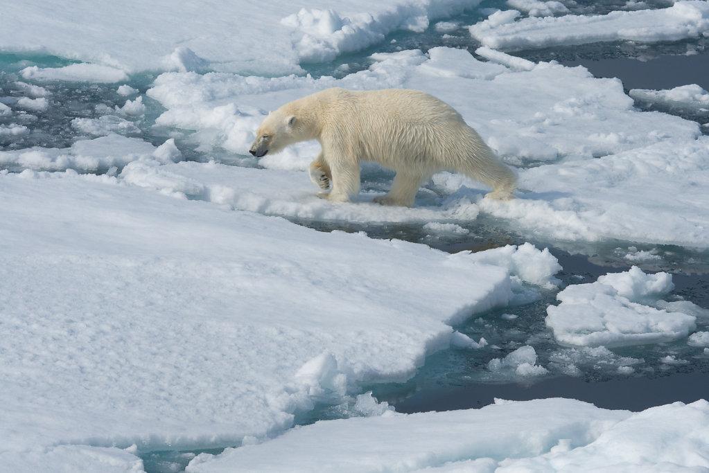 Spitsbergen14-21.jpg