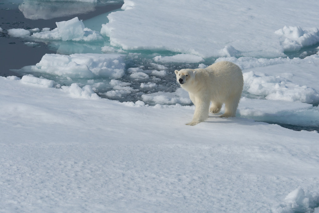 Spitsbergen14-22.jpg