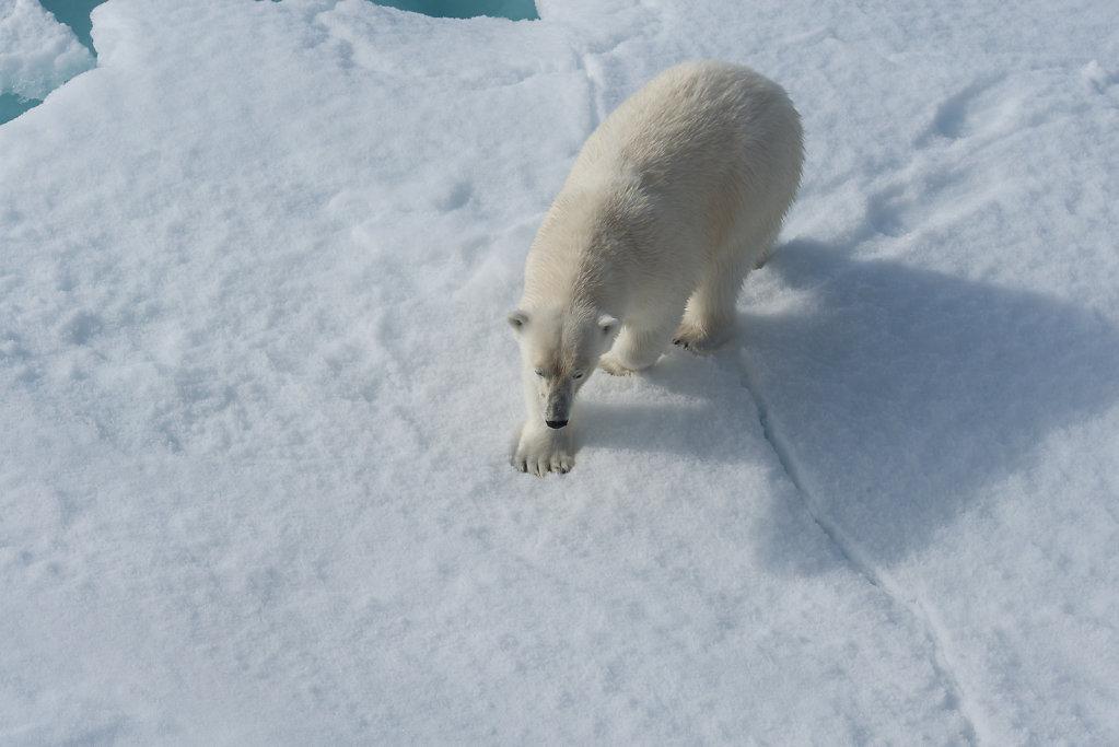 Spitsbergen14-23.jpg