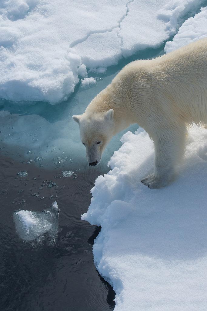 Spitsbergen14-28.jpg