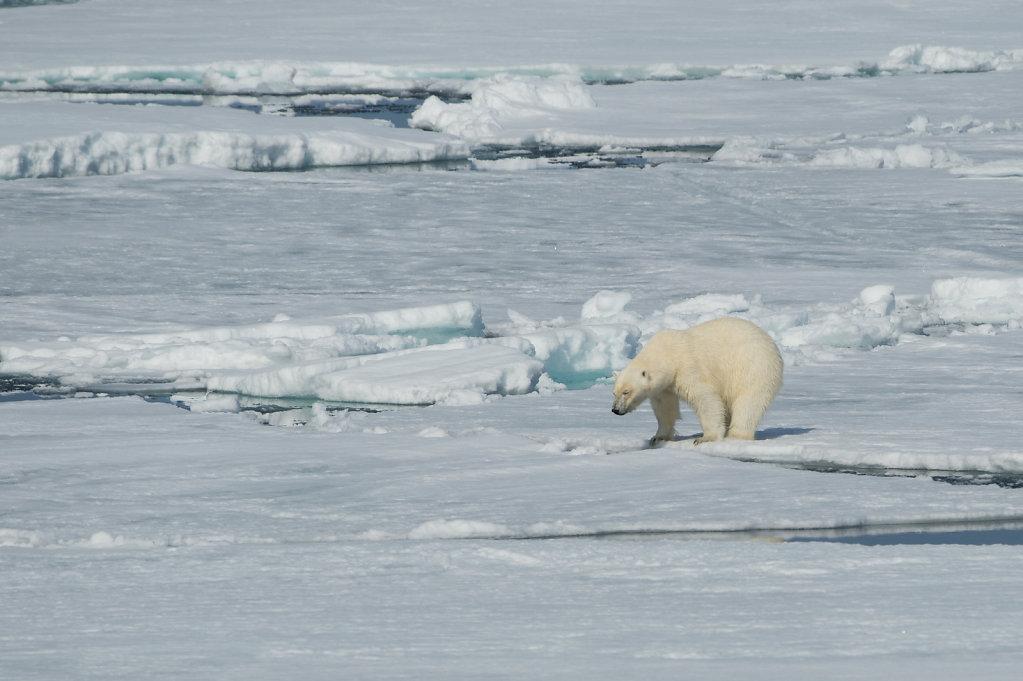 Spitsbergen14-33.jpg