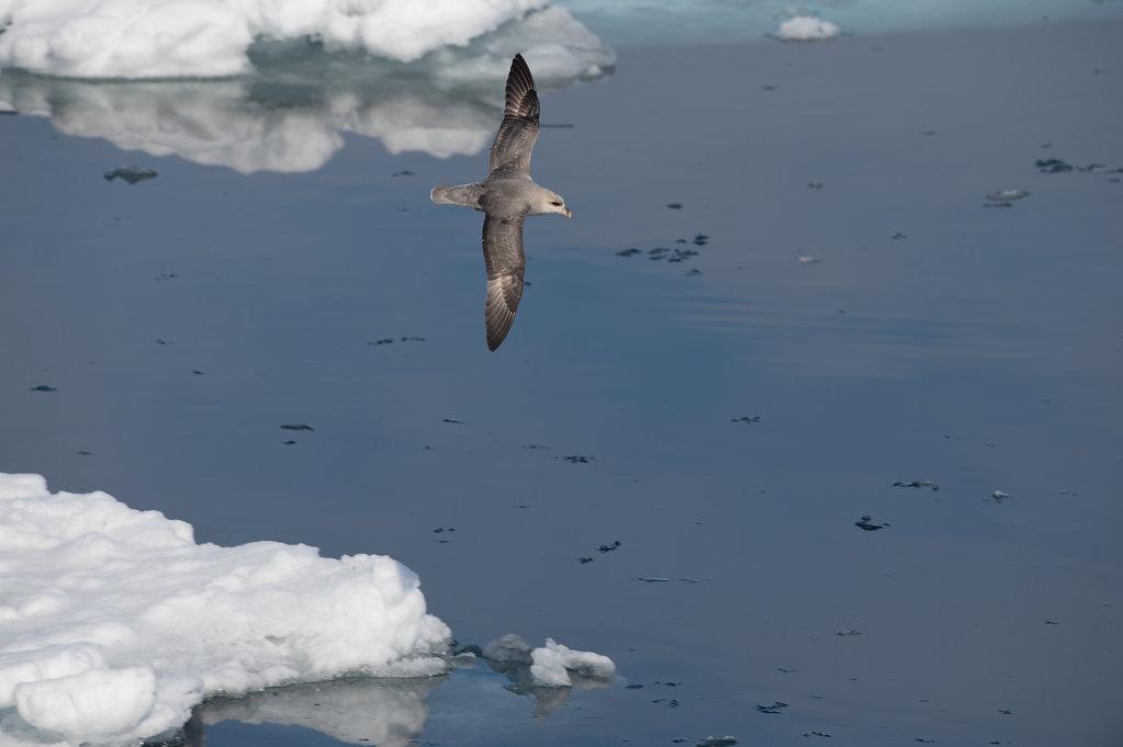 Spitsbergen14-37.jpg