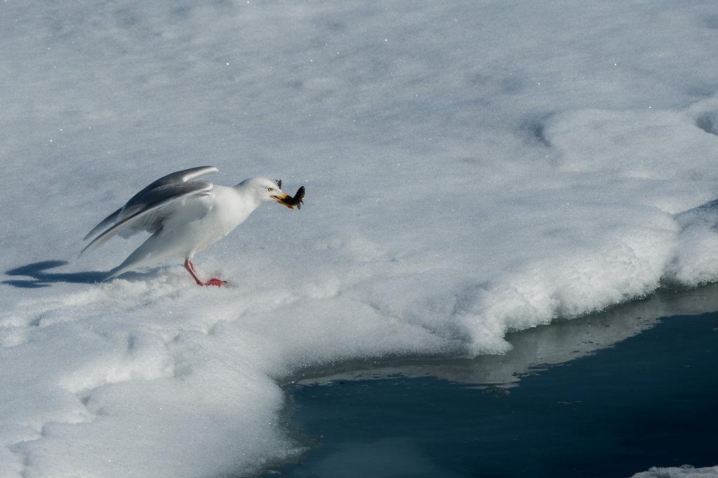 Spitsbergen14-39.jpg