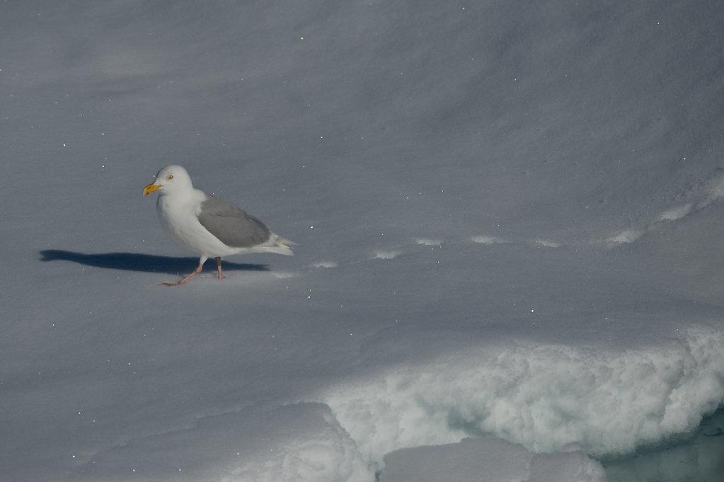 Spitsbergen14-41.jpg