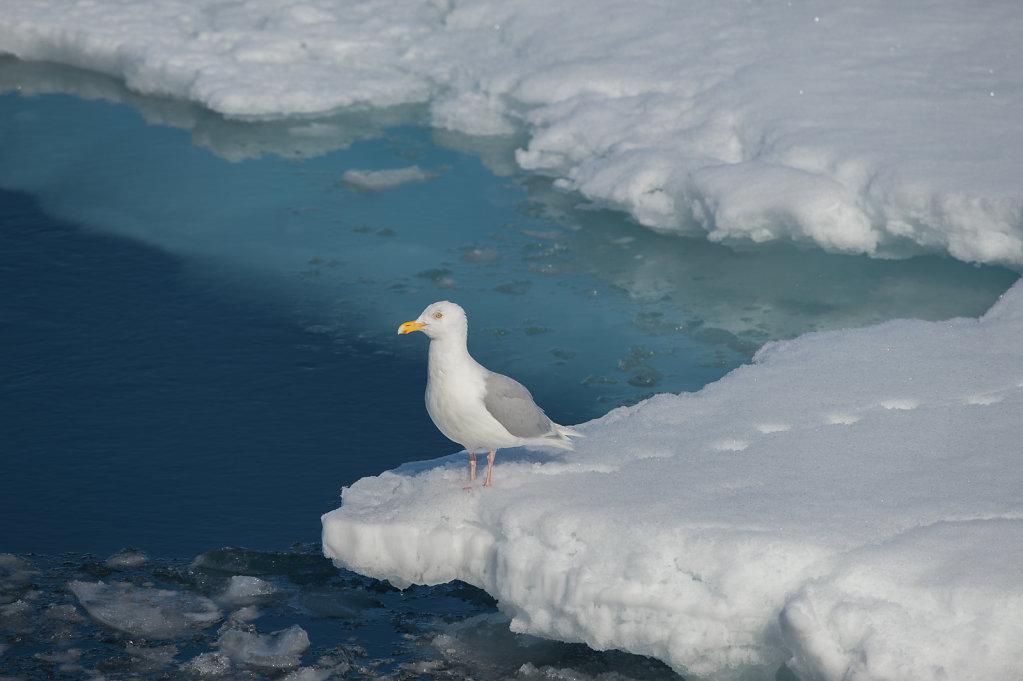 Spitsbergen14-42.jpg
