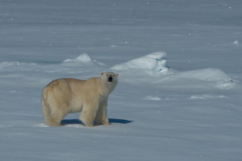 Spitsbergen14-48.jpg