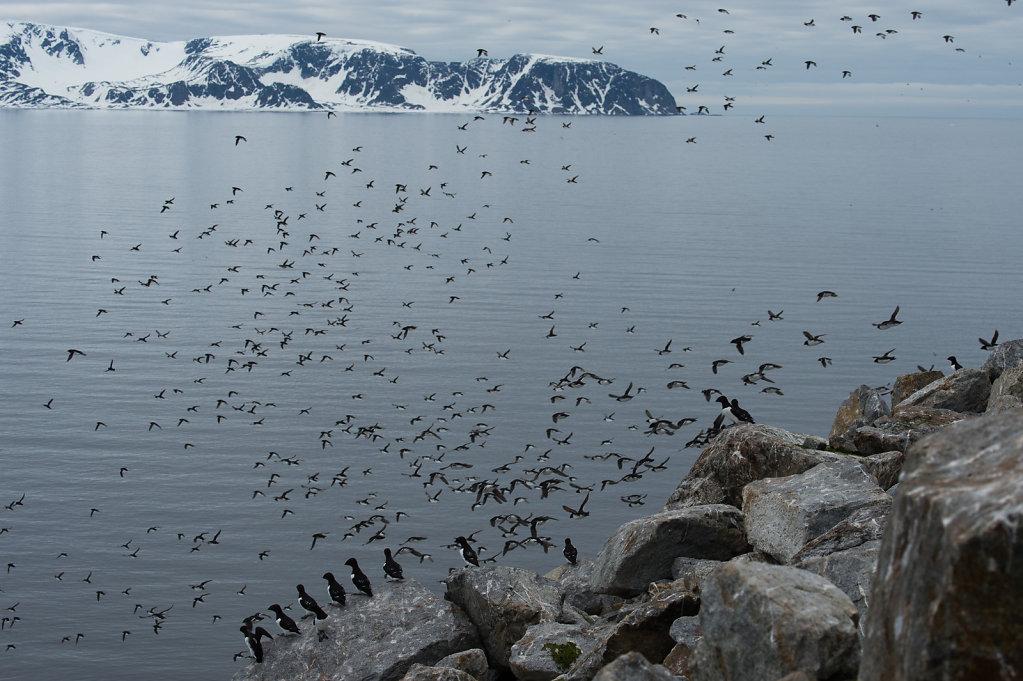 Spitsbergen14-56.jpg