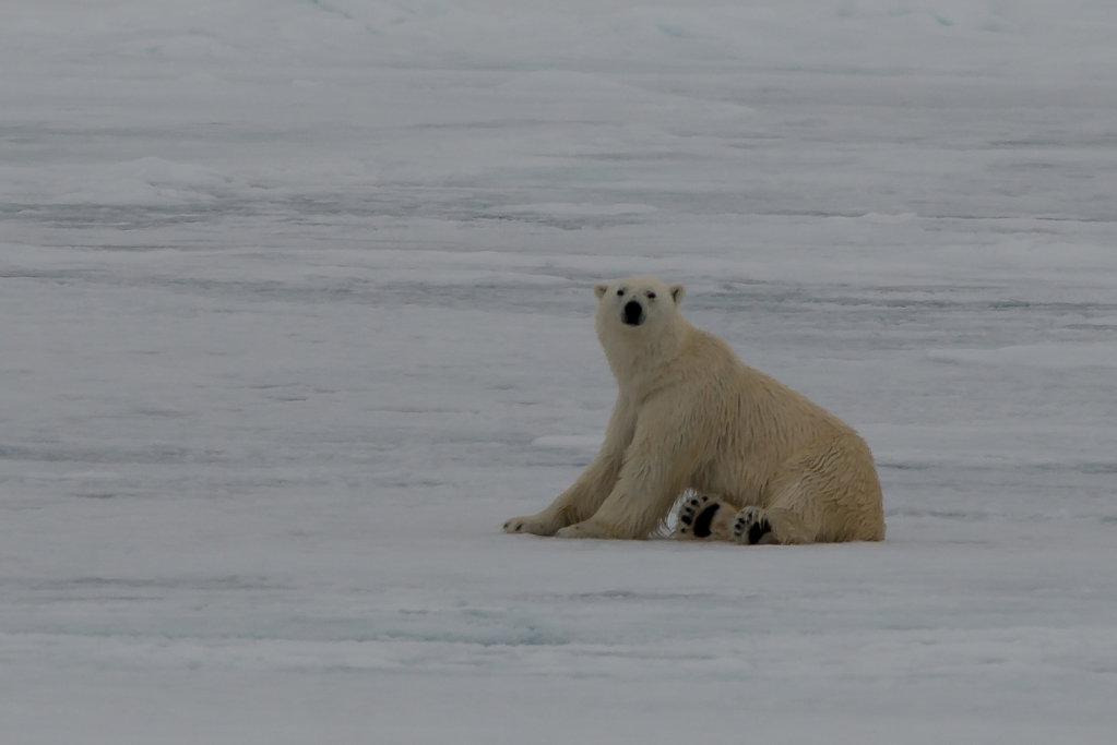 Spitsbergen14-66.jpg