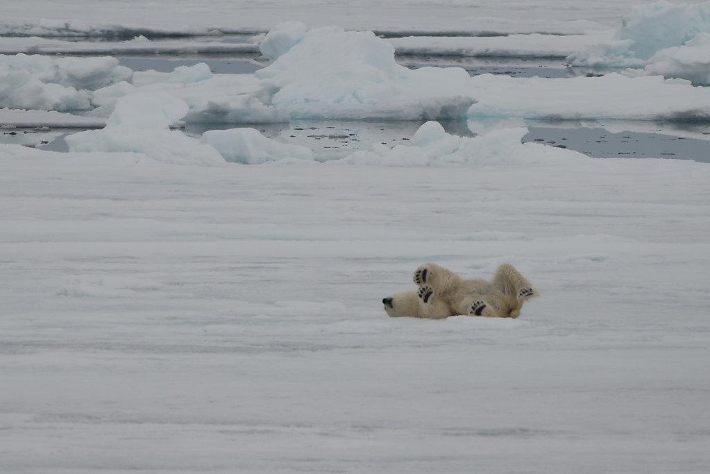 Spitsbergen14-67.jpg