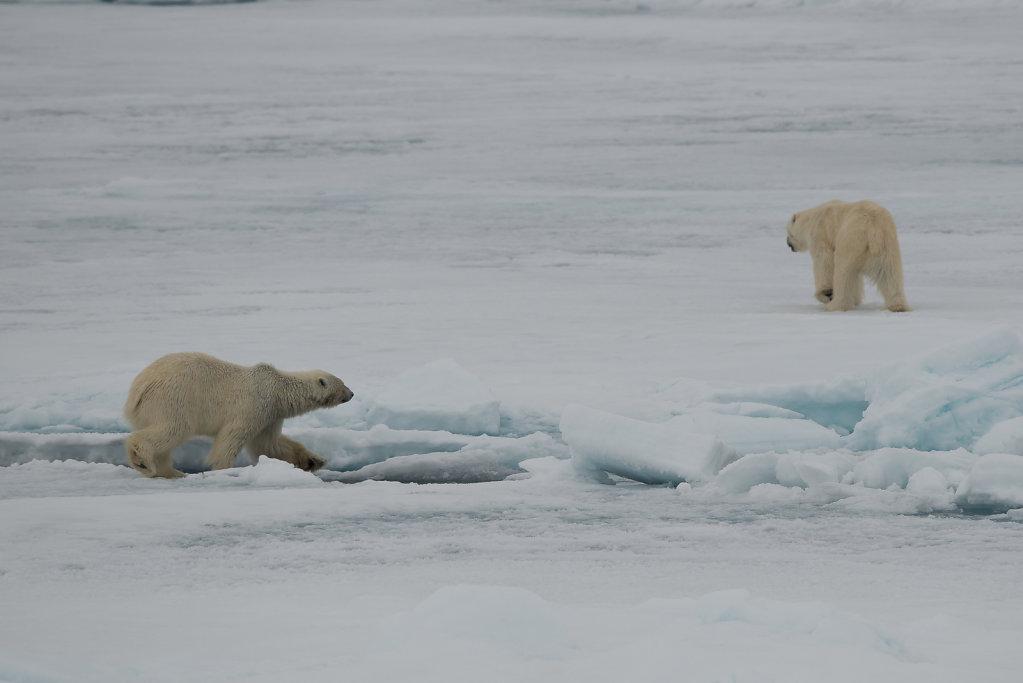 Spitsbergen14-69.jpg