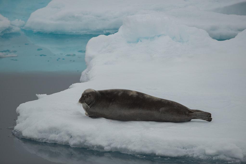 Spitsbergen14-71.jpg